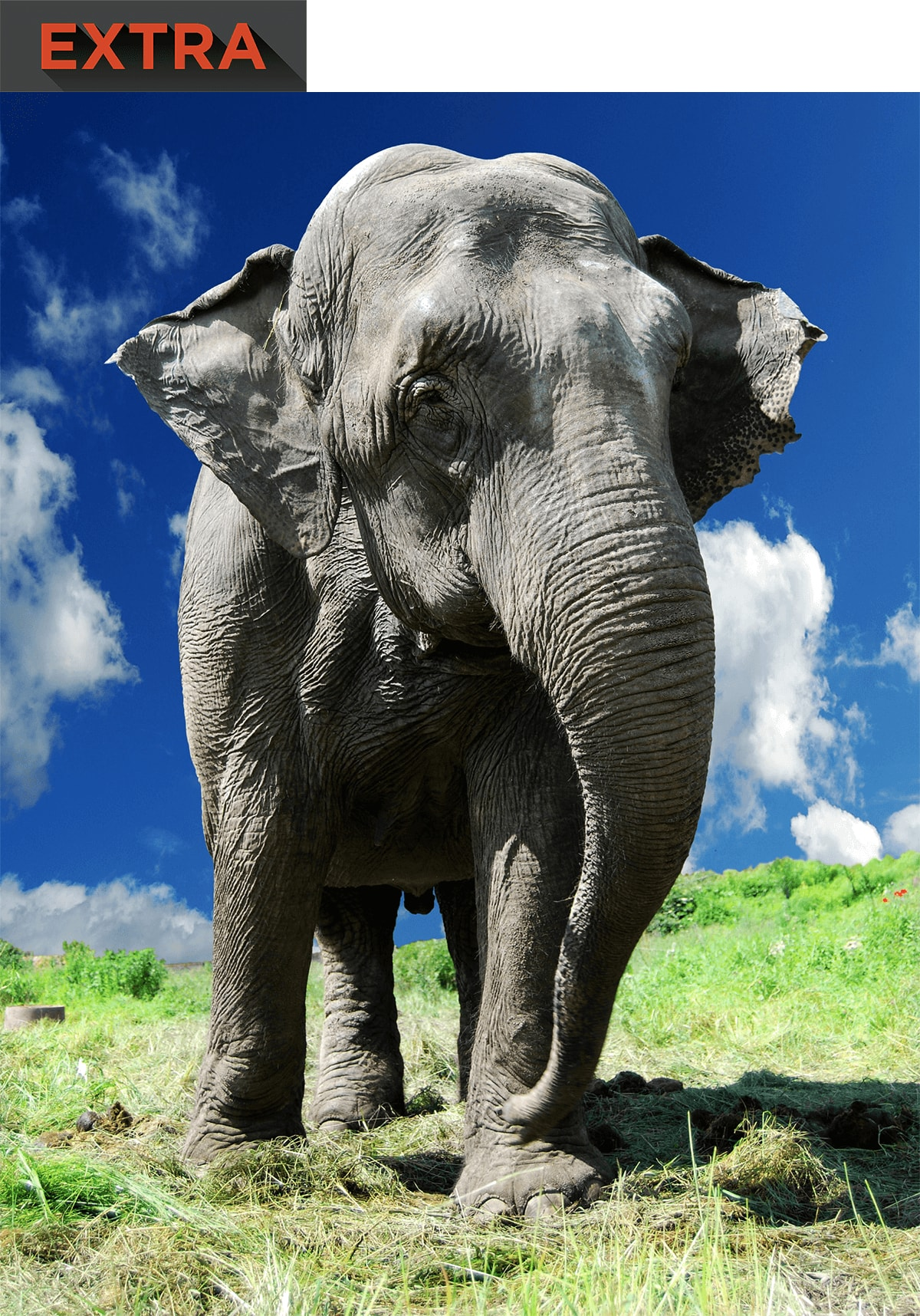 A large elephant.